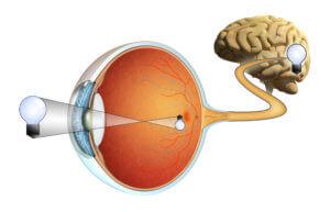 """איור 2 אך תמונה מוקרנת אל תוך הרשתית של העין דרך קרנית העין בצורה הפוכה ומיושרת ע""""י המוח ."""